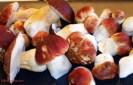 Fresh Porcini/Cep