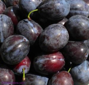 blog-victoria-plums-aka-italian-prune1.jpg