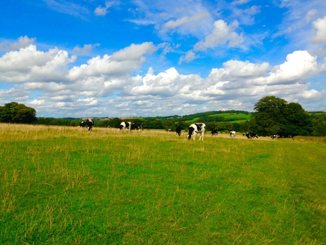 Yorkshire Clotted Cream comes from Yorkshire Cows