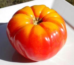 Pretty heirloom tomato 001