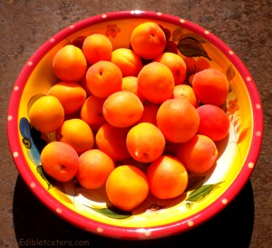 Fresh Paonia apricots 009
